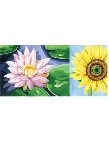 Набор для раскрашивания акварельными красками. Подсолнух/Лилия REEVES/Ривс