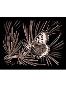 Гравюра медная. Бабочка REEVES/Ривс